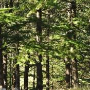 National Arboretum-9844