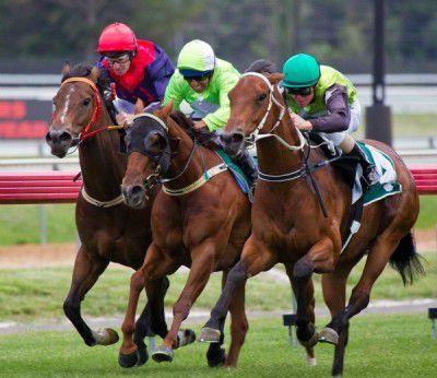 horse race lr