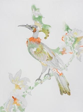 Nicola Dickson's work based on Bauer's Noisy Friar Bird print