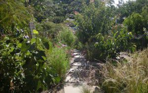 Trudy's garden