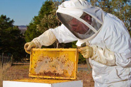 John Grubb (Beekeeper) 040
