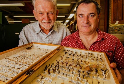 "Volunteer Glen Cocking, left, and insect collection chief Dr David Yeates, who says the number of different species of insect in Australia is around 200,000 and ""we only have names for about 25 to 30 per cent"".  Photo by Gary Schafer"
