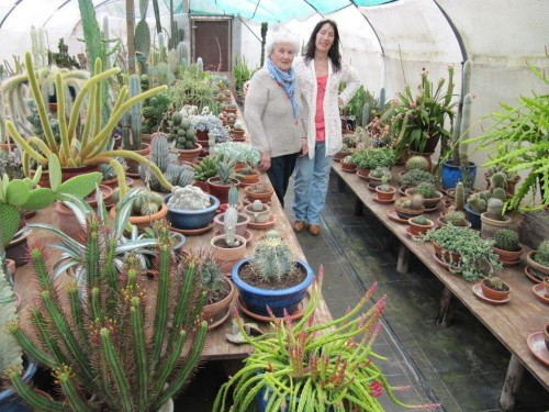 A small section of one of the largest cacti collections in Holland.