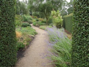 "The ""Dry Garden"" at Lambley Nursery… the plants are only watered three to four times a year."