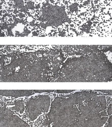 Surface Studies detail, Jemima Parker