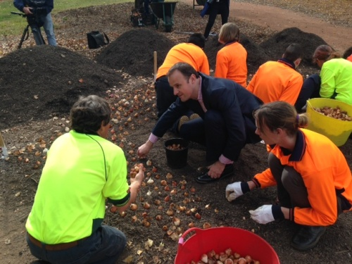 andrew barr plants a bulb