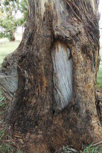 page-images-tree-trunk