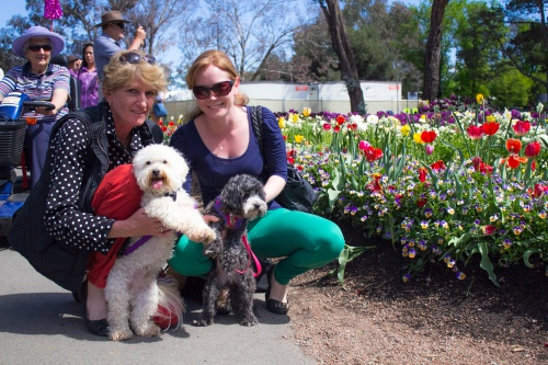 dogs at Floriade
