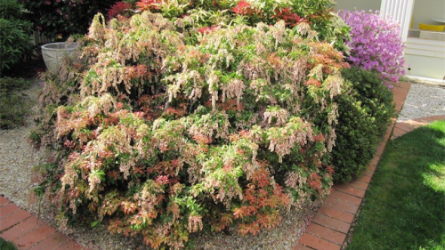 A spectacular show of pieris at the National Film and Sound Archive.