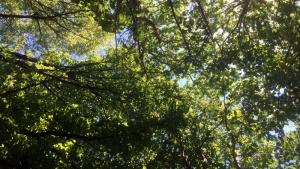 trees in glebe park