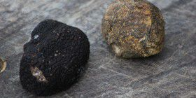 Right to left: Black diamond truffle and Bohemian trufle