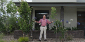 """Here's that """"how-not-to-plant-trees"""" picture of Cedric between a liquidambar, which grows to 12m with a similar spread, and Pistachio, slightly smaller at 8m x 8m!"""