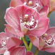 Orchids… so easy to look after, almost surviving on neglect.