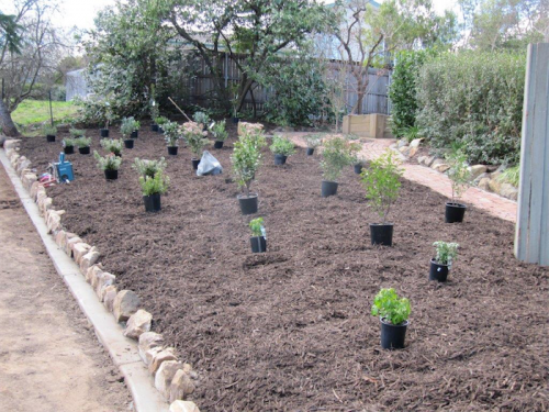 2014: Shrubs laid out in the Melba garden ready for planting.