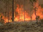 Bushfire risk 'above average', warns emergency chief