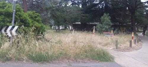 Haig Parks long grass.