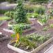 Cedric Bryant's garden.