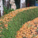 Clear fallen leaves from the tops of hedges… wet leaves can be heavy and cause severe damage, especially to small-leafed hedges.