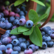 Blueberries… pick them when the fruit is completely blue with a slight white surface bloom from midsummer to early autumn.