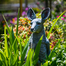 Wanniassa open garden 2017