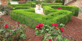 A low-maintenance garden at Gleneagles… designed to match the Federation-style home.