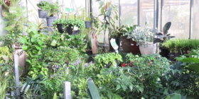 Popular again… 40 per cent jump in sales of indoor plants in the UK.