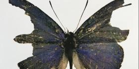 Ingeborg Hansen, 'Butterfly' screen print, 2018