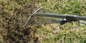 Scarifying lawns with a steel rake.