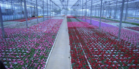 Flowers at a wholesale nursery ready for the spring rush.