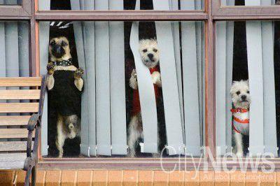 Dogs at McKellar-6111