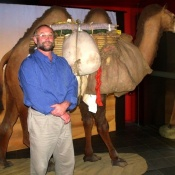 Dr Mike Pickering with the exhbition's life-size model of a Bactrian camel. Photo by Helen Musa