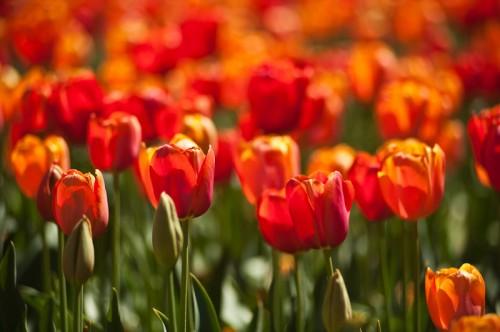 floraide