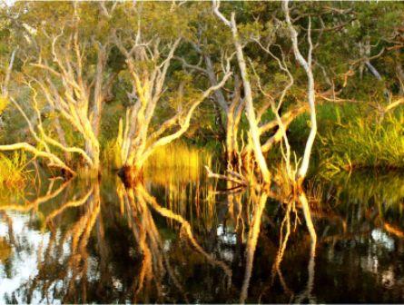 """""""Bowarrady - Effects of a Sunset #2"""" by  Cindy Wilkins"""