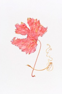 Sharon Field, grape leaf - watercolour on paper