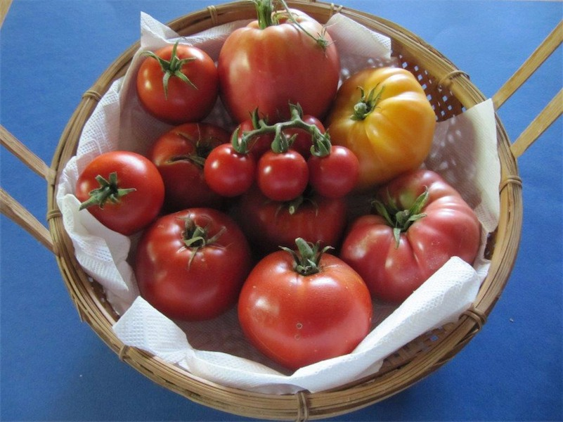 Howard Hollingsworth's basket of just a few of the tomato varieties he grows.