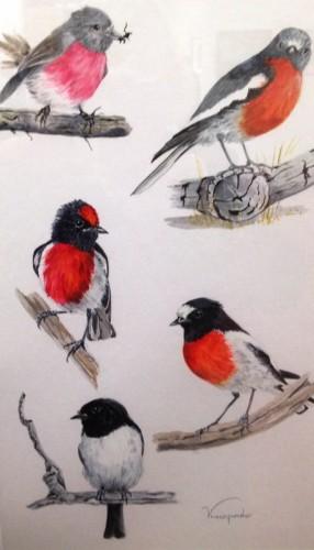 The emblem: Some Australian Robins by Viv Pinder.