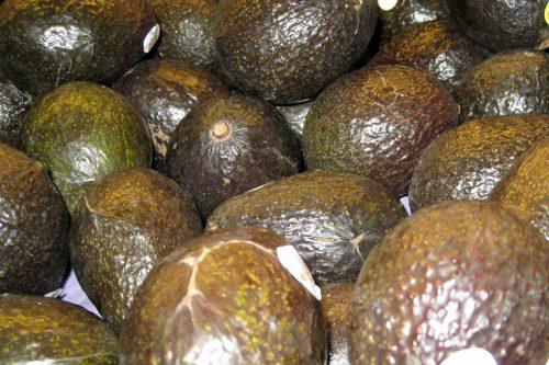avacados