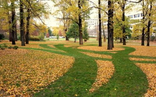 leaf circles