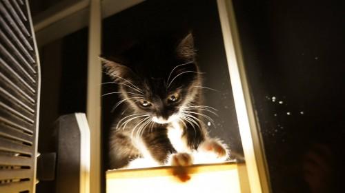 charlotte the kitten