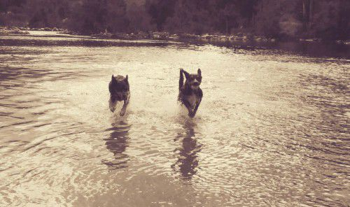 george and orwell at the river
