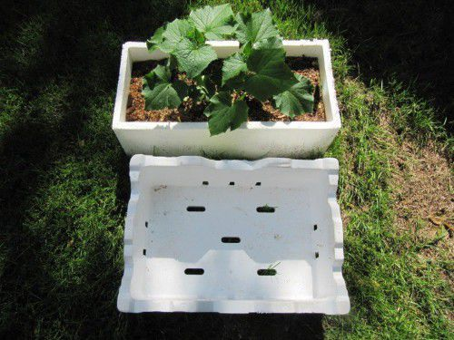 A mini veggie garden… look for the sort of polyurethane boxes thrown out by supermarkets.