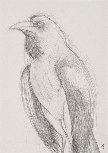 Beaver Galleries - Jan Brown - 'Bird', graphite on paper, 31 x 22cm