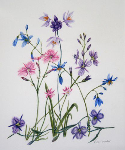 Native Lilies by Vivien Pinder
