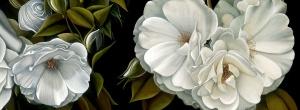 Susie Sierra 'Fleurs de Nuit'