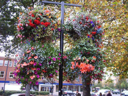 Plant variety is the secret of hanging gardens.