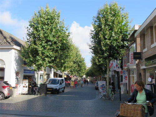Shady street trees in Holland.