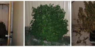 richardson grow house