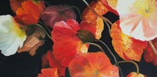 poppy feature crop