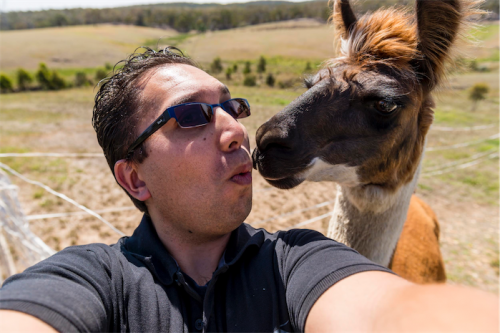 Me and the llama… Andrew Finch's kiss-and-tell selfie with Zumba.