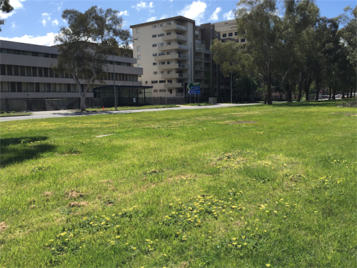 Tomorrow calling… A section of Northbourne Avenue now bare and treeless.